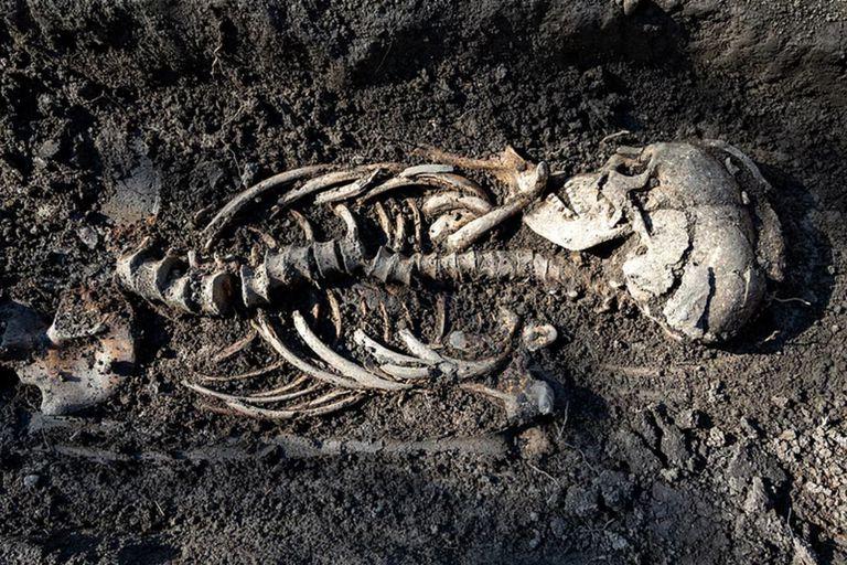 Un equipo de arqueólogos halló siete tumbas vikingas que datan del año 900