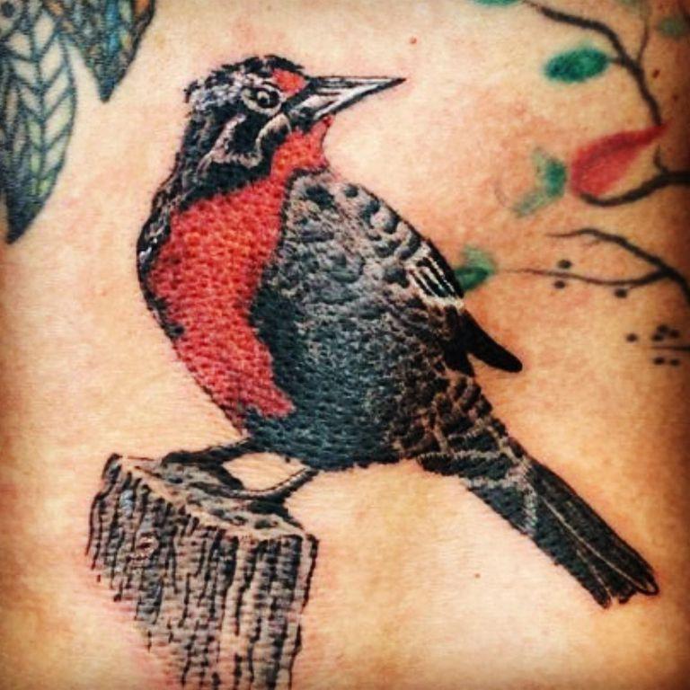 La loica, el tradicional pájaro chileno que eligió Valenzuela para otro de sus tatuajes