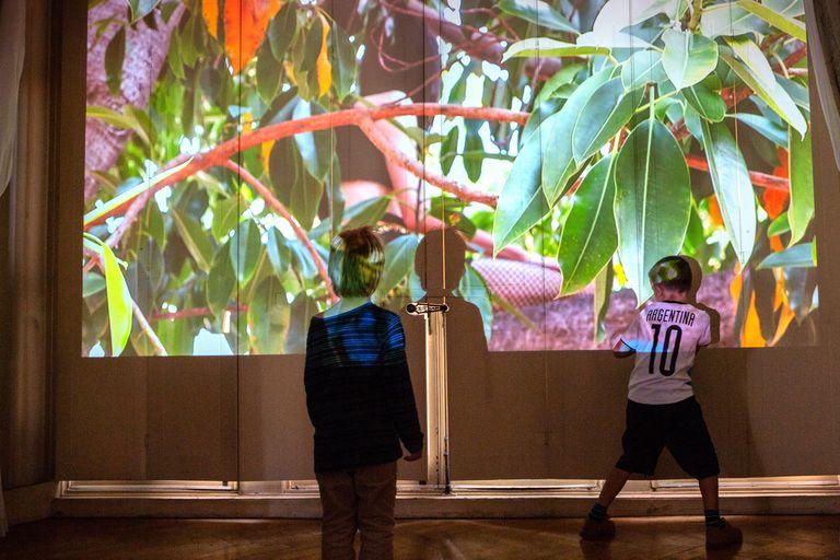 """En un atractivo entorno señorial, una treintena de artistas demuestra muy bien cuáles son los temas de época y cómo las pantallas pueden tener otros lugares y usos en el hogar. En la foto, las cortinas de un amplio ventanal sirven de pantalla a """"Gomero"""", el trabajo de Osías Yanov"""