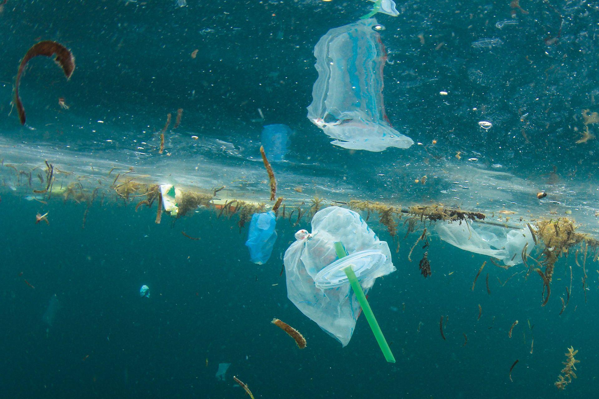 Se estima que para 2050 vamos a tener más plásticos que peces en el mar