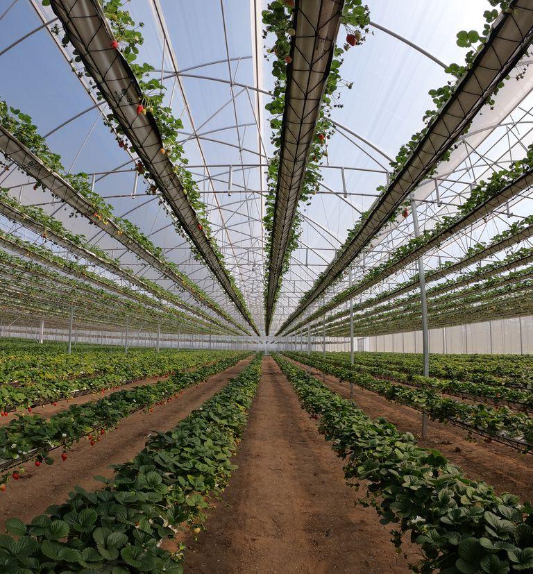 Invirtieron US$1,5 millones para tener el invernadero hidropónico más grande del país