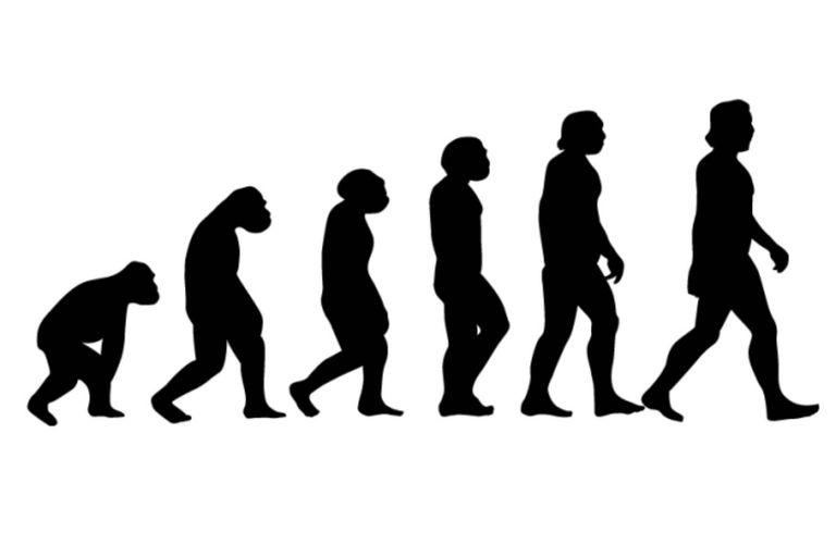Una de las tantas versiones que representan la evolución humana