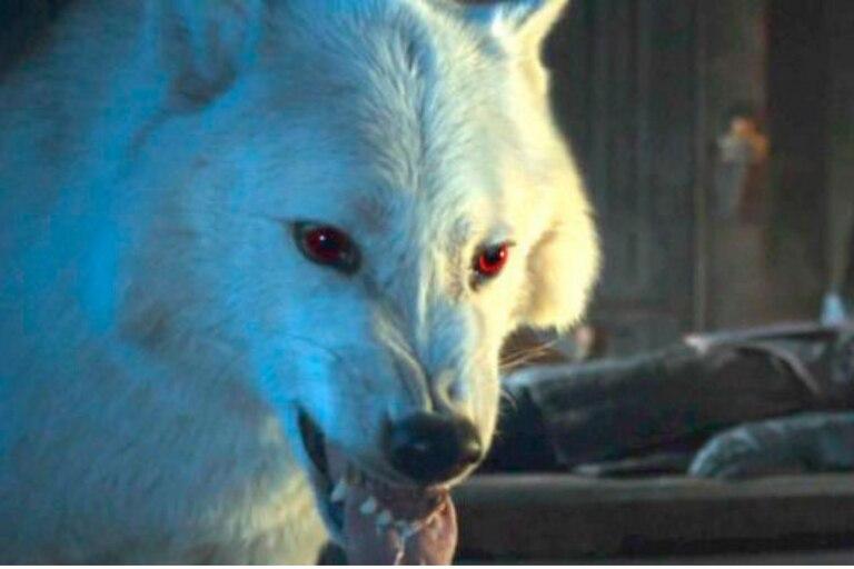 """El lobo """"Ghost"""" en la serie Juego de Tronos"""