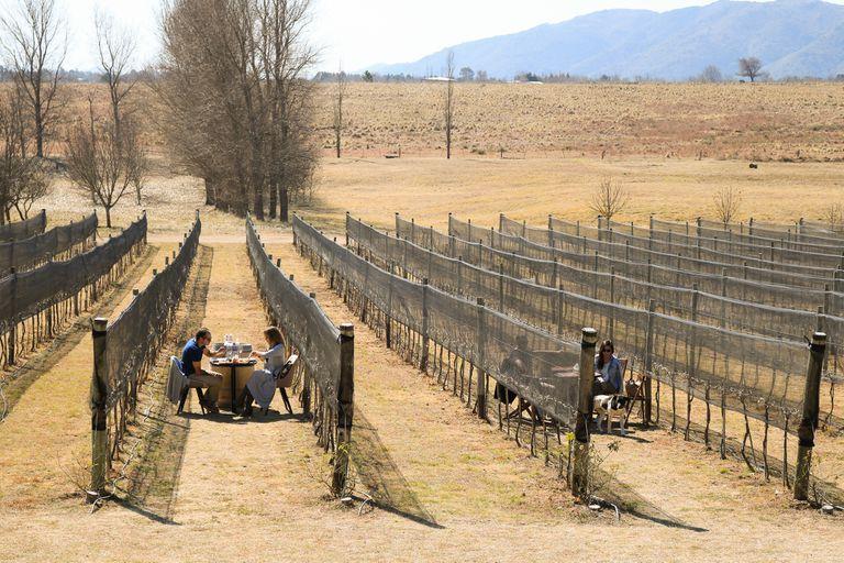 Una ruta del vino incipiente, con bodegas boutique y una uva única en el país, legado de los jesuitas