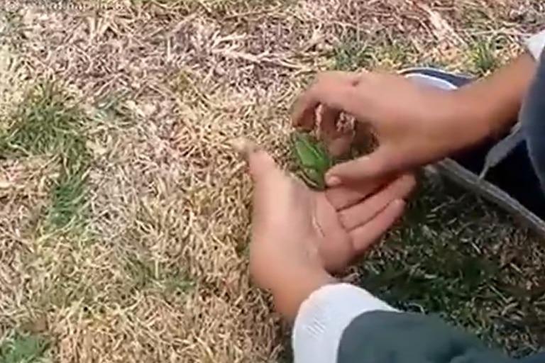 Una escena tragicómica de la naturaleza se volvió viral en TikTok