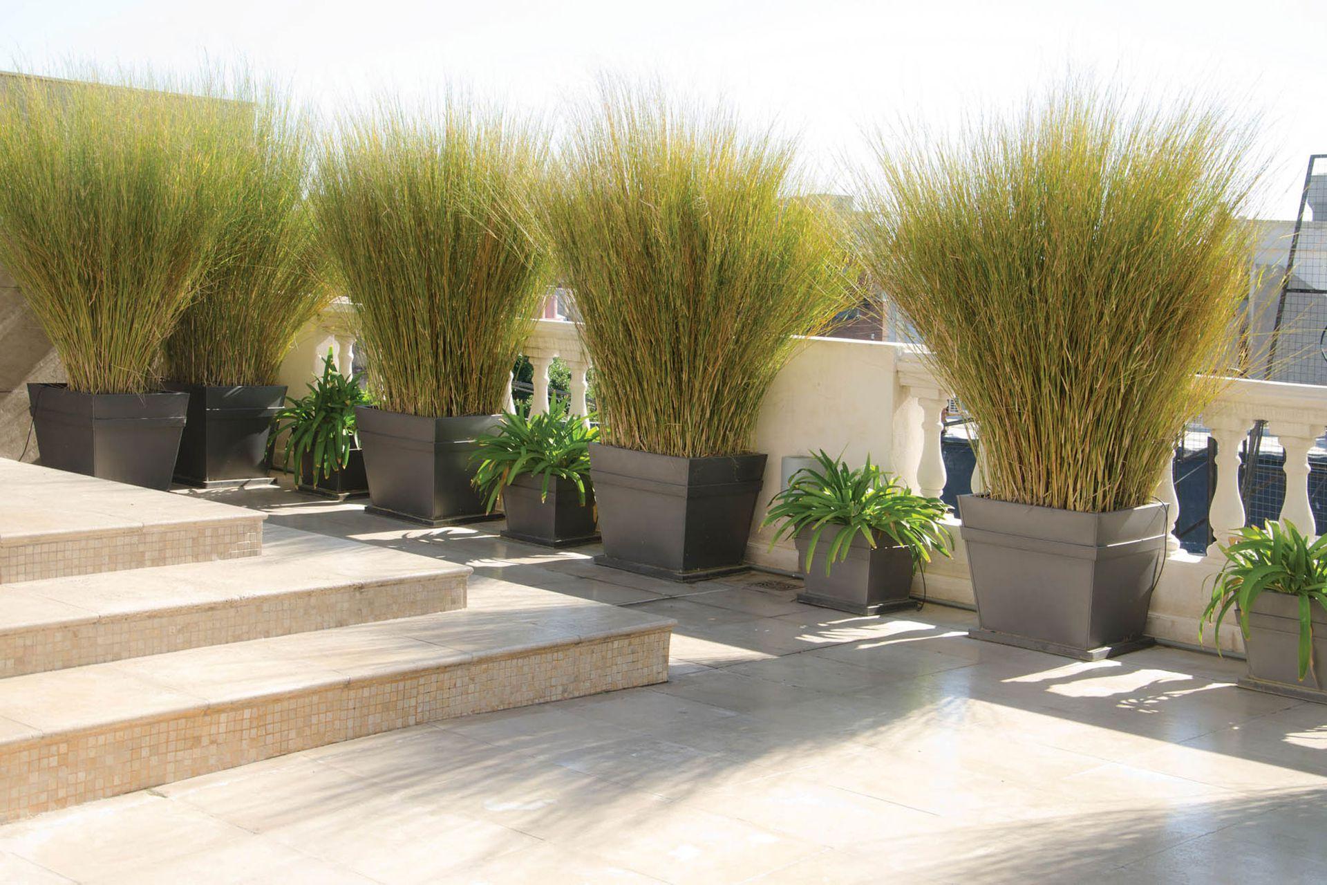 Las terrazas ventosas necesitan plantas flexibles y bien amarradas en pesados maceteros.