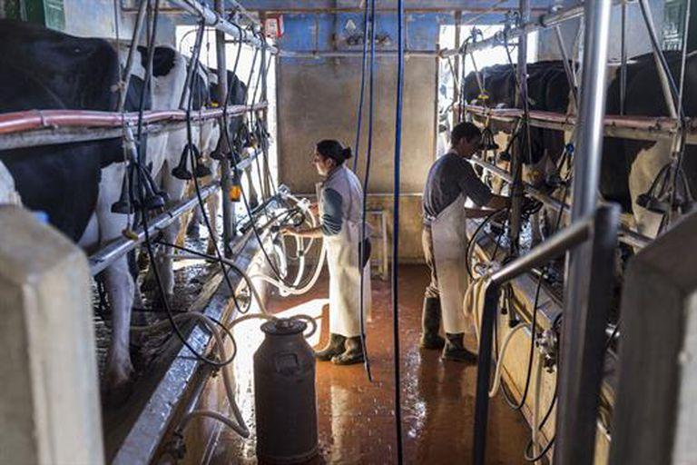 Los productores piden, entre otros puntos, transparencia en la cadena