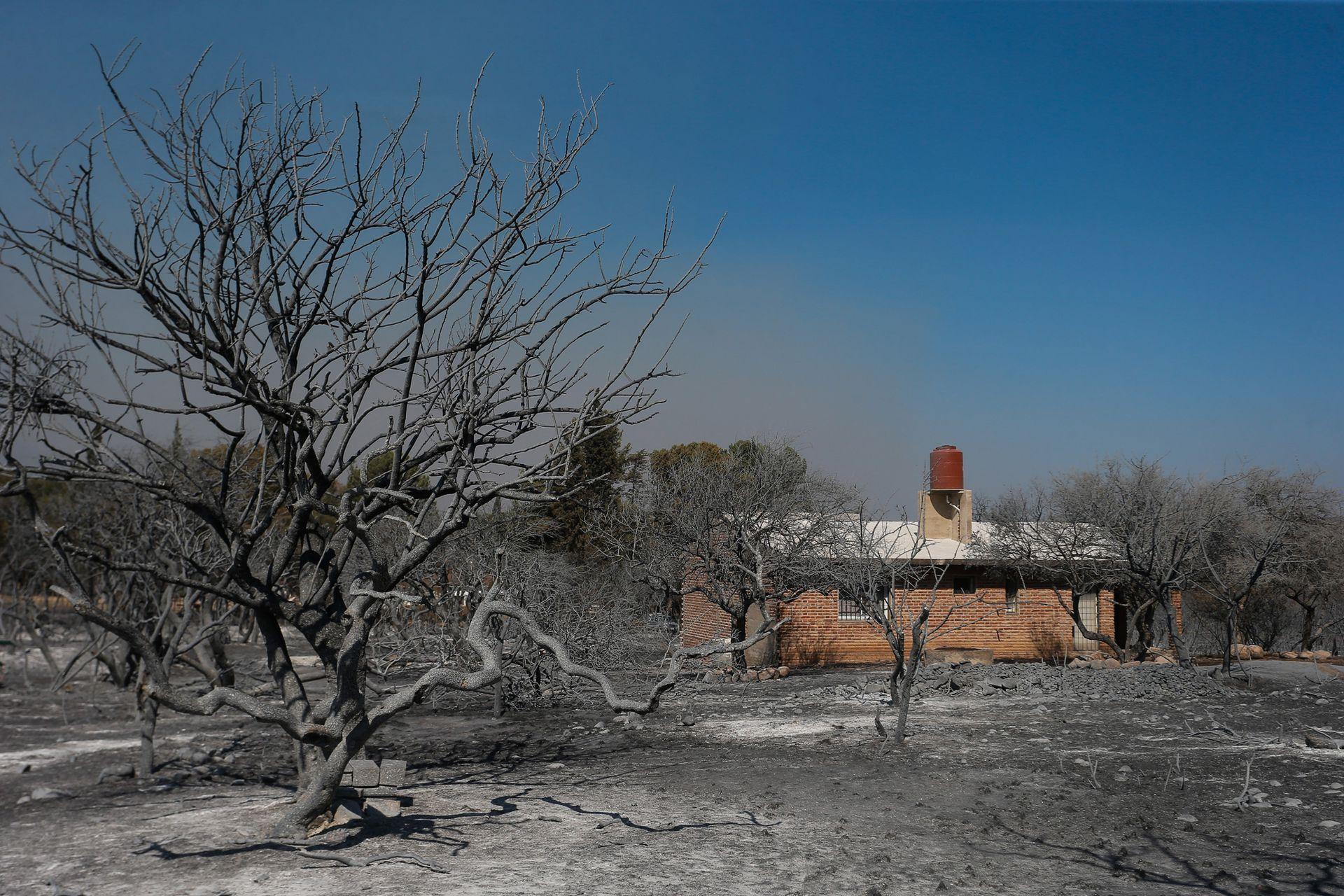 Unas 250 dotaciones de bomberos trabajaron para contener el fuego