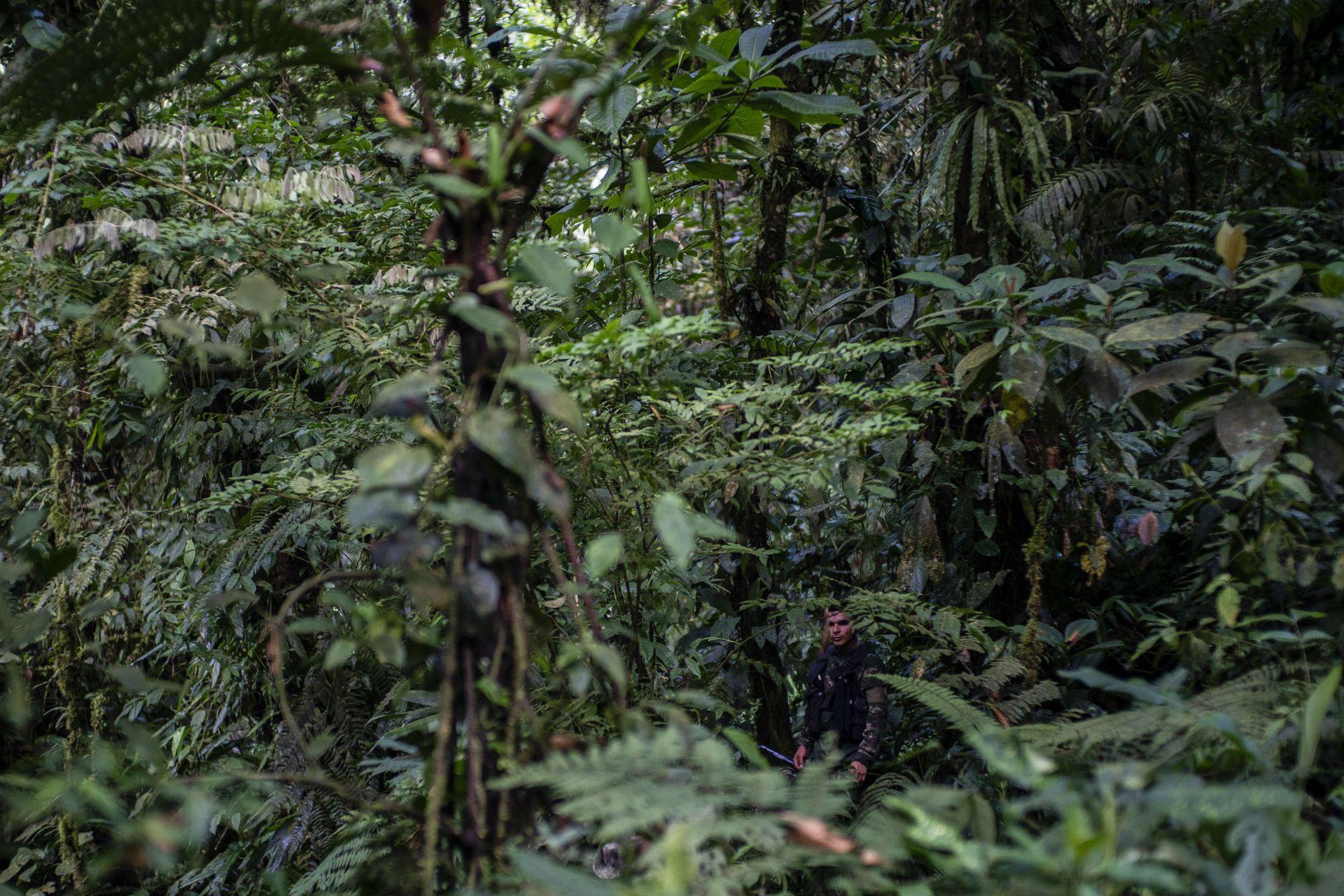 Un combatiente en la selva en la que los disidentes establecieron su nuevo campamento