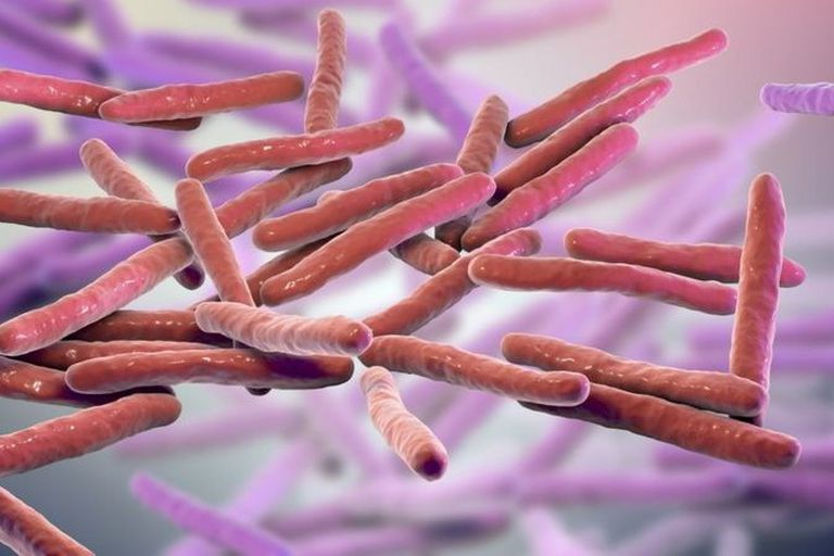 La lepra es causada por el bacilo Mycobacterium leprae.