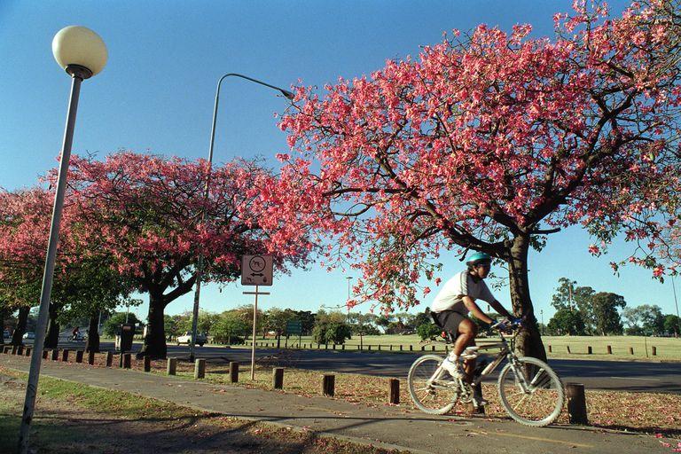 En la Ciudad de Buenos Aires coexisten más de 341.000 árboles de 423 especies distintas.
