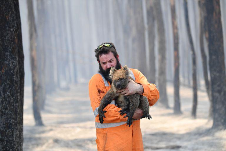 Simon Adamczyk rescata un koala en un bosque en llamas cerca de Cape Borda en la isla Canguro, al suroeste de Adelaida