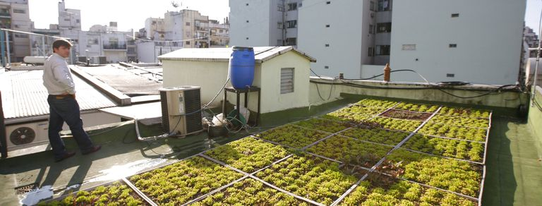 Una huerta en una azotea porteña, del proyecto Terrazas verdes
