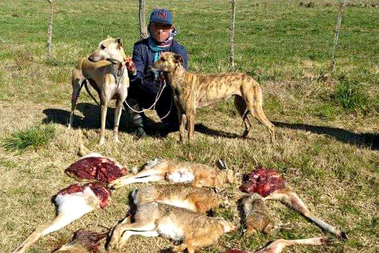 Denuncian tours de carreras ilegales de galgos y caza furtiva en campos privados