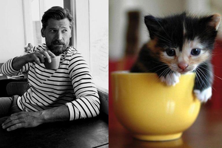 Des hommes et des chatons, el tumblr sexy y lindo.