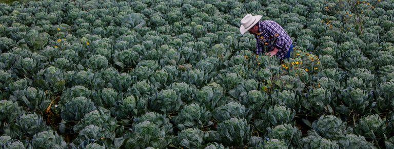 """""""La biodiversidad es fundamental para salvaguardar la seguridad alimentaria"""""""