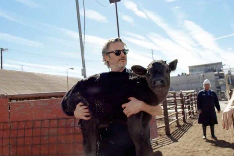 Joaquin Phoenix salvó a una vaca y a su cría de un matadero