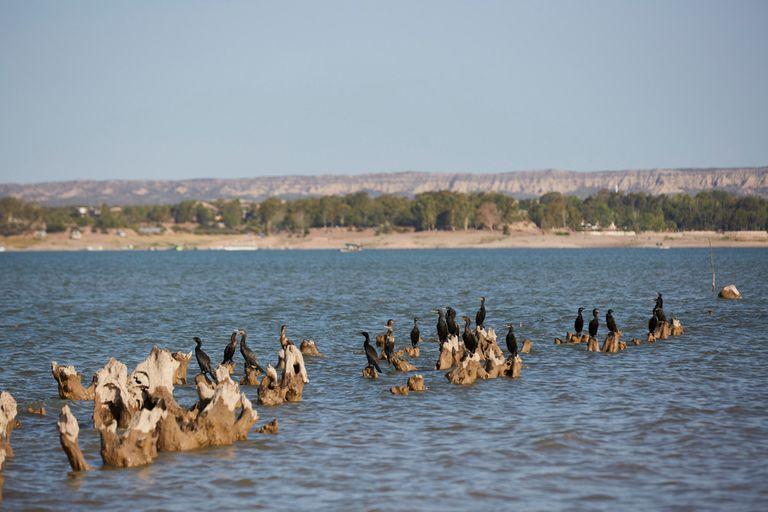 La notoria baja del agua en el dique El Carrizal