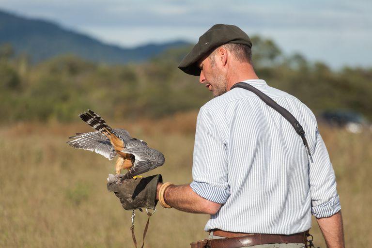 El francés que dejó los safaris africanos para hacer volar halcones