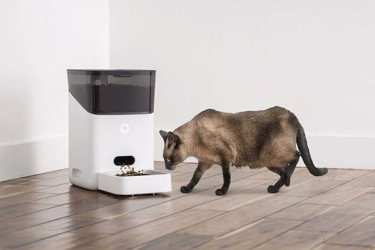 Ahora, hasta las mascotas de la casa pueden usar dispositivos inteligentes
