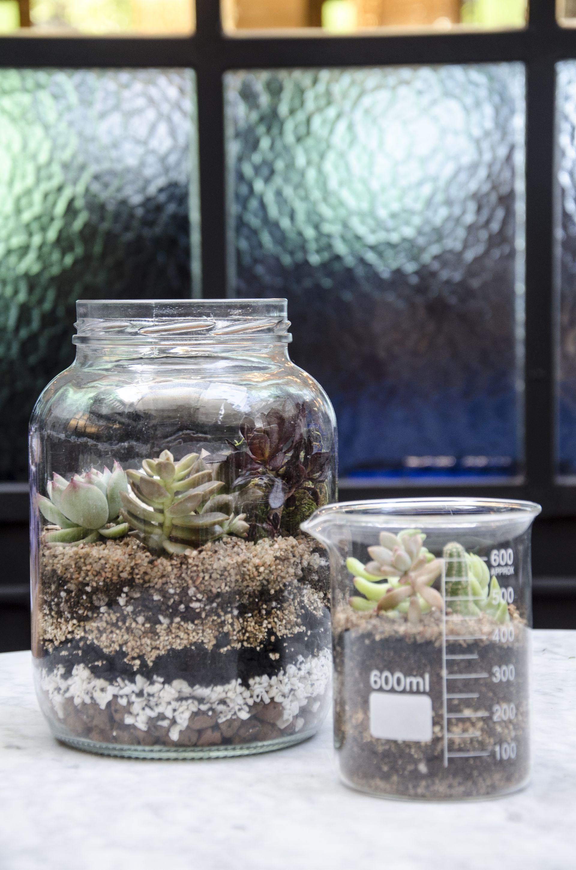 Frascos vintage, cajas de vidrio, ensaladeras o bowls para reciclar son aptos para usar como contenedores de un terrario.