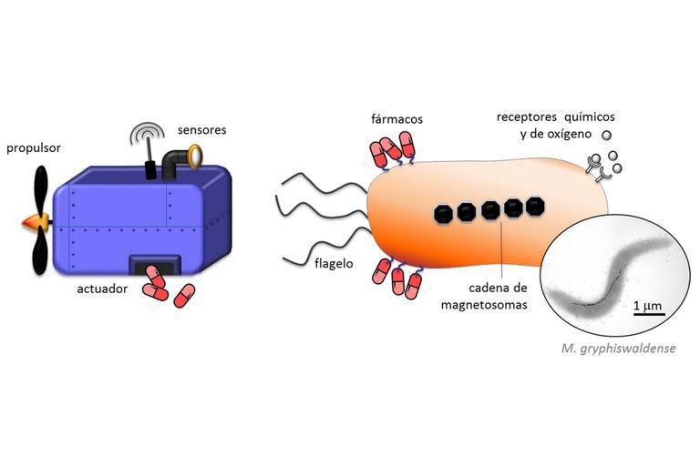 Figura 1: (Izquierda) Esquema de las propiedades deseadas de un nanorrobot para su aplicación clínica y (derecha) características de las MTB. La fotografía de la derecha corresponde a una imagen de microscopía electrónica de transmisión de la especie M. gryphiswaldense, objeto de estudio del GMMM