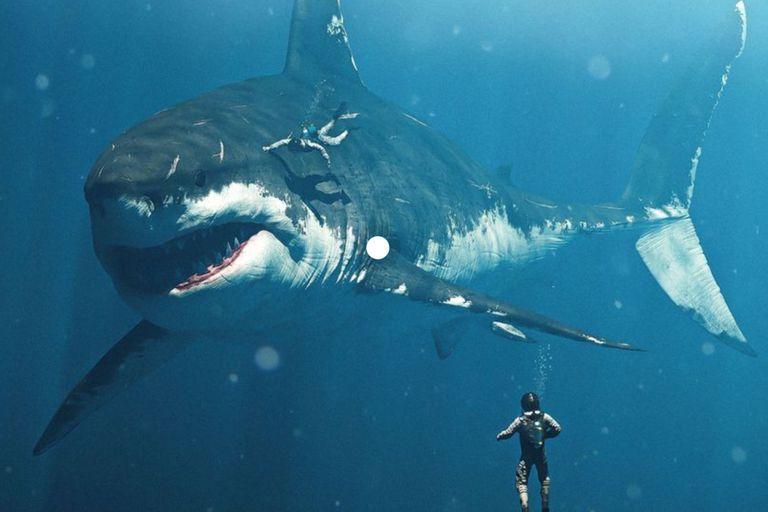 """Megalodón: encuentran una explicación para el tamaño de los """"tiburones gigantes"""""""