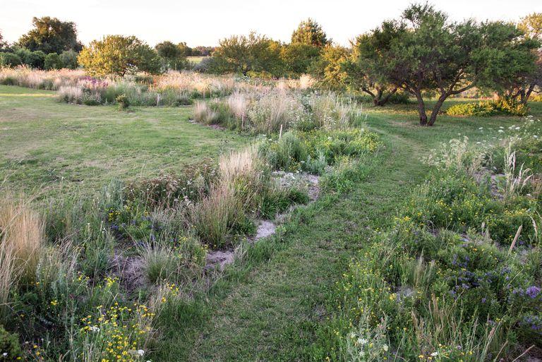 El jardín experimental de una paisajista diseñado para atraer a la fauna local