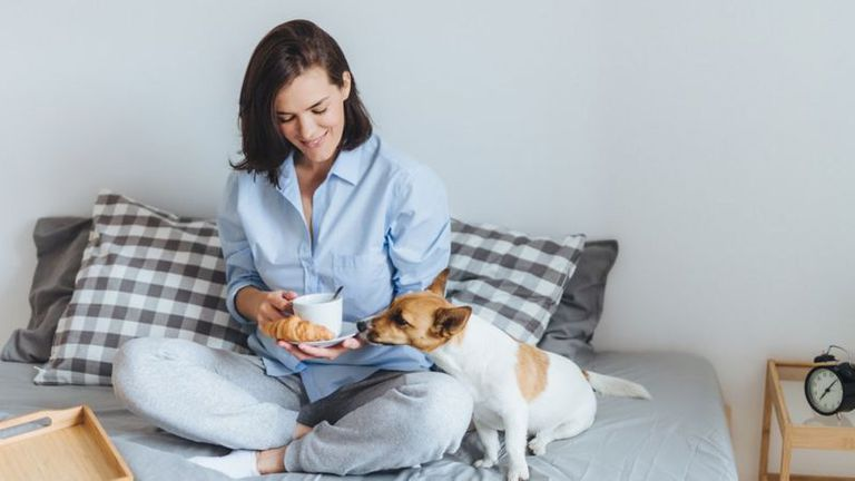 Evita comer en la cama y dejar que las mascotas suban a la cama. Son fuente de más gérmenes.