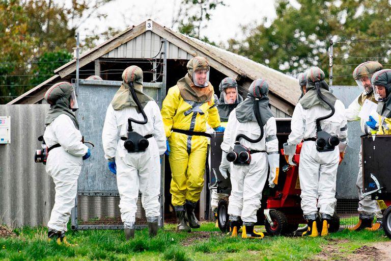 Coronavirus. Dinamarca sacrificará a 15 millones de visones por el riesgo de que hagan menos efectiva una posible vacuna