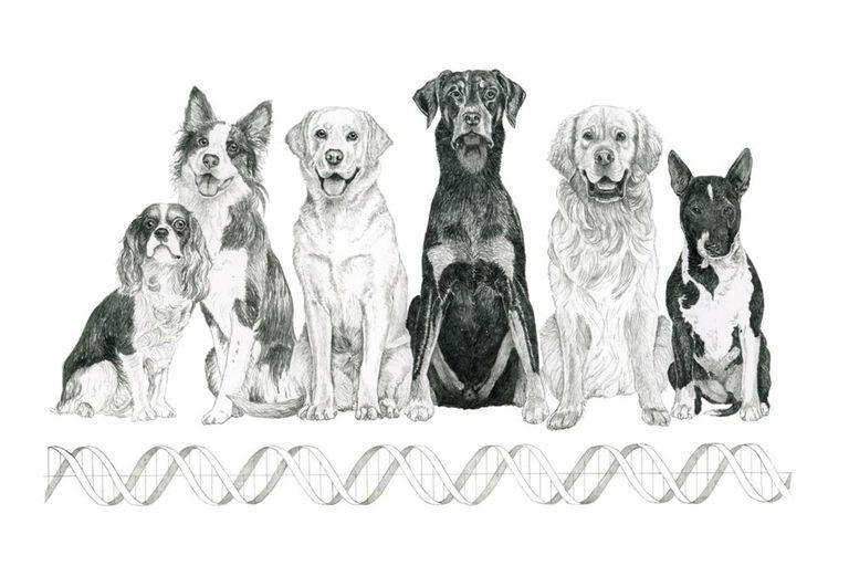Los perros sufren un desorden del comportamiento llamado Trastorno Compulsivo Canino; una periodista con TOC relata su experiencia con ellos