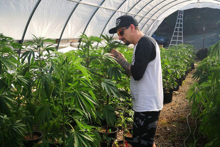 Especial Cannabis: Mariano Duque, el MVP de los breeders
