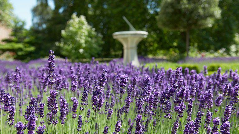 El príncipe Carlos realizó un rediseño del jardín de Clarence House en base a las indicaciones que había dejado su abuela.