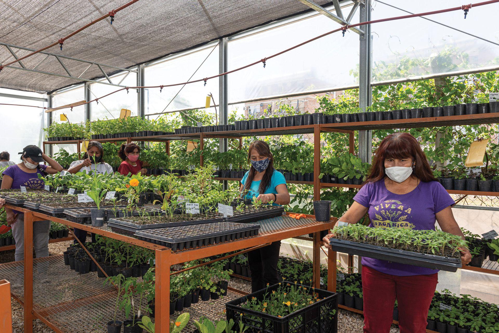 En el invernáculo de Vivera orgánica, se inician los trabajos de siembra, tanto de plantines de huerta como de nativas.