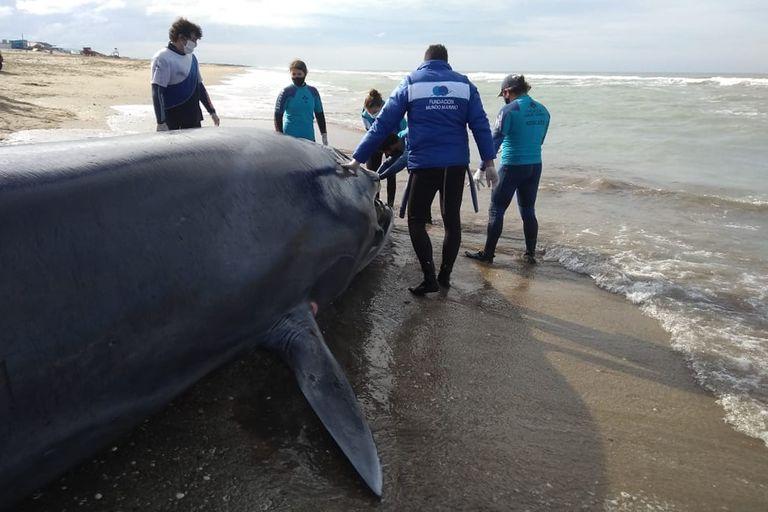Costa Esmeralda: Fallido intento para rescatar una ballena varada en la playa