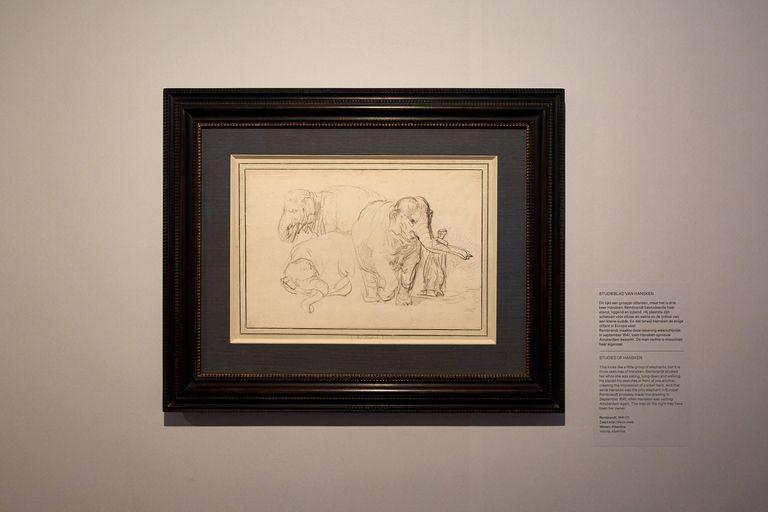 """Un dibujo en tiza negra, probablemente de 1641, en la casa-museo de Rembrandt en Ámsterdam; la exposición """"Hansken, la elefanta de Rembrandt"""" explora la vida errante y la muerte prematura de este animal que se convirtió en un espectáculo para la Europa del siglo XVII"""