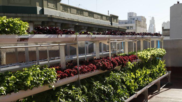 Las huertan admiten todo tipo de productos: desde vegetales y frutas, hasta aromáticas y flores