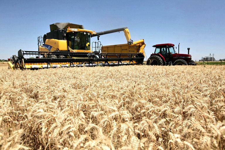El Gobierno creará una comisión para auditar el trigo transgénico