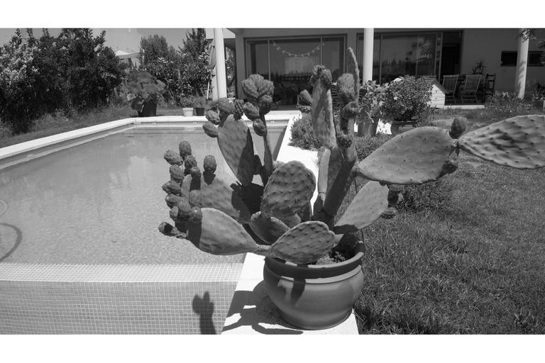 La misma imagen del nopal convertida a blanco y negro con un editor de imágenes convencional
