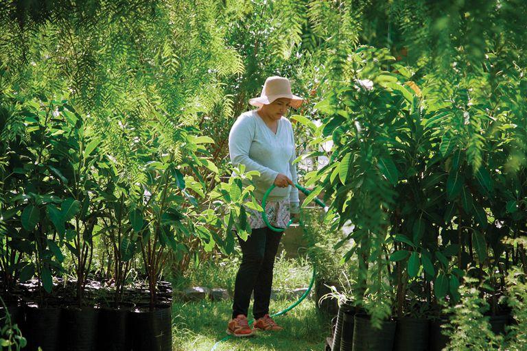 El vivero APrA (Agencia de Protección Ambiental) funciona en Villa Soldati.