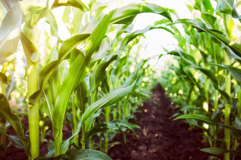 Mercado de granos: por qué Chicago volvió a tomar un nuevo impulso