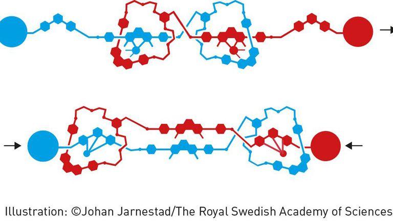 Imagen: Johan Jarnestad/the royal swedish academy of sciences