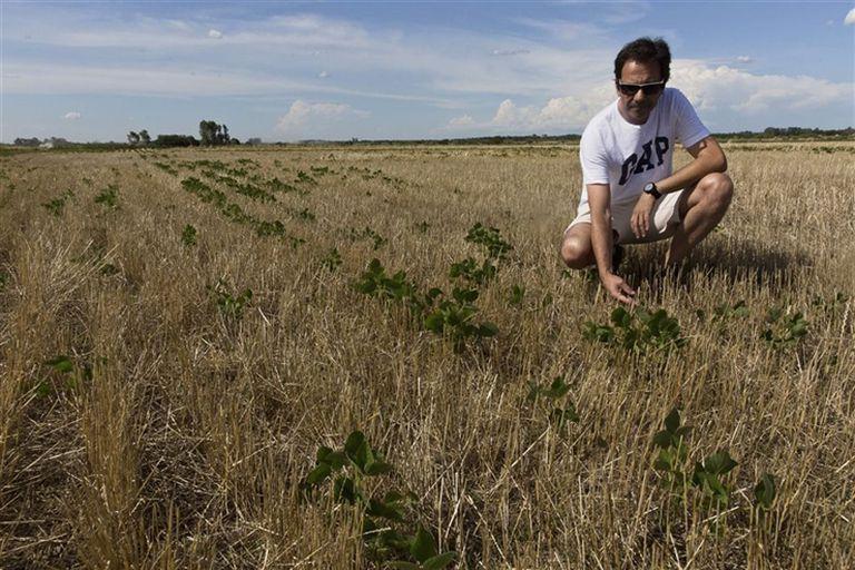 Los cultivos están sufriendo estrés hídrico