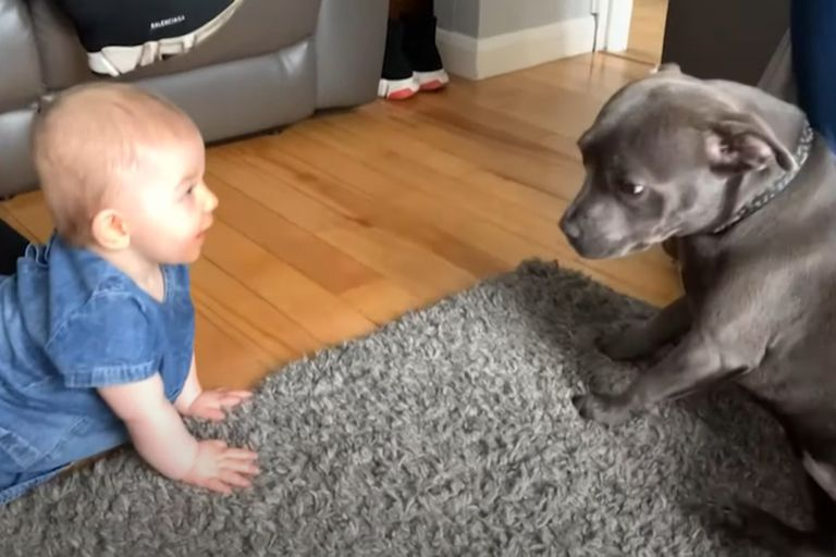 Muchos usuarios destacaron la amabilidad con la cual la perrita reacciona frente a la bebé.