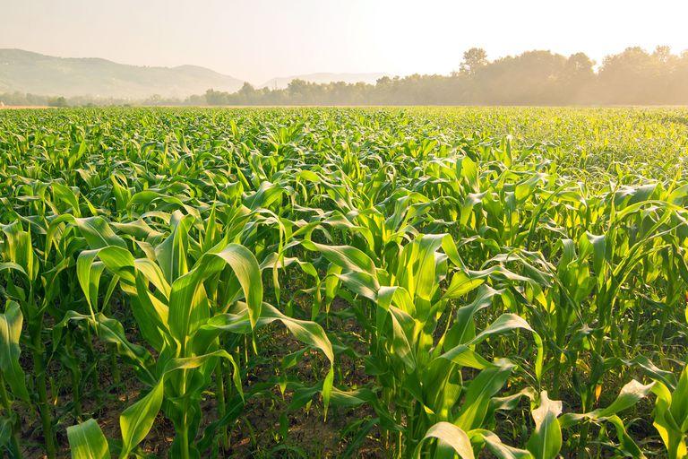 En noviembre pasado un 57% de los productores consideraban que era un mal momento para invertir. Ahora ese indicador saltó a 59%
