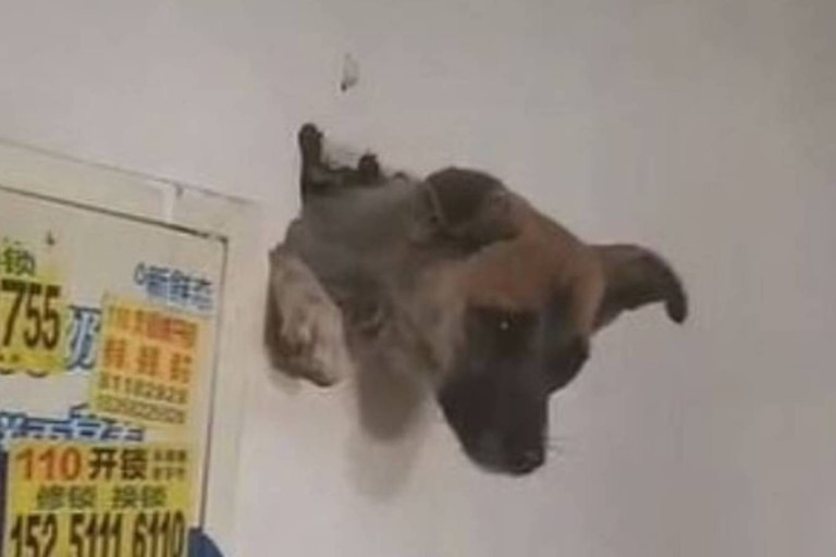 Los rescatistas ampliaron el agujero de la pared a martillazos, hasta que finalmente la mascota pudo salir de su atoramiento sana y salva