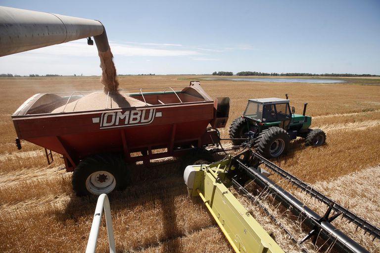 Reorganización impositiva: condiciones que deben cumplir las empresas del agro