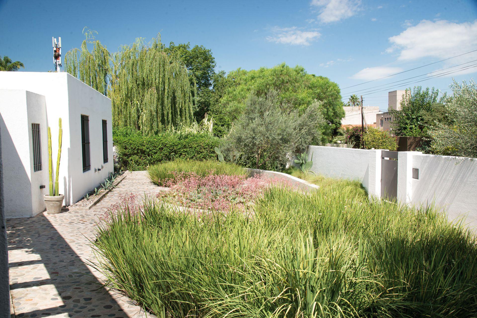 El patio de ingreso se planteó como una superficie seca, con formas circulares que albergan dietes y suculentas como la Echeveria 'Blue Bedder'.