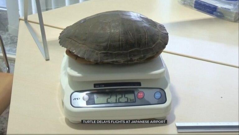 La tortuga pesó poco más de dos kilos y 30 centímetros de diámetro