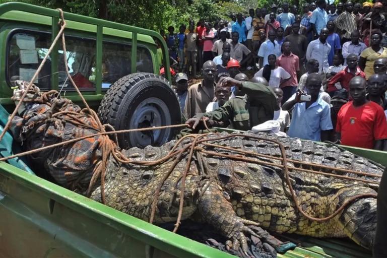 El cocodrilo es el responsable del 10% de la muerte de la población de una localidad